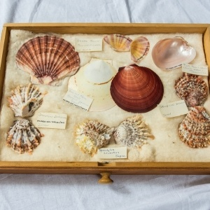 World Shell Collection
